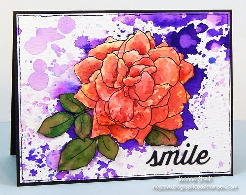 WM Smile Rose Jeanne_Streiff